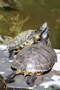 Secrets, tall tales and turtles